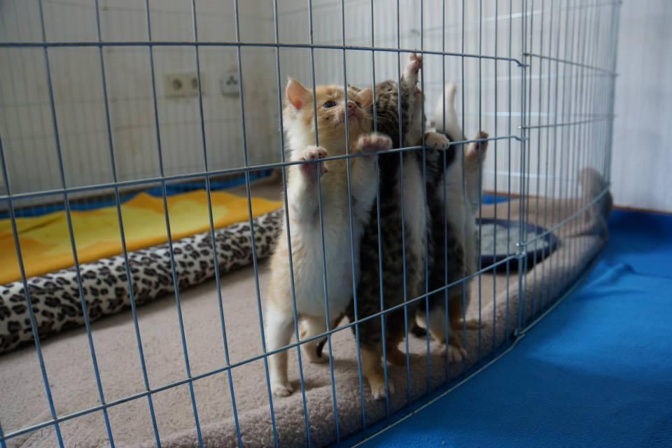 Kastrationspflicht für freilaufende Katzen kommt.